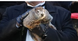 """Groundhog Club co-handler John Griffiths holds Punxsutawney Phil, the weather prognosticating groundhog, on Feb. 2 during the 132nd celebration of Groundhog Day in Punxsutawney, Pennsylvania. Monday, Feb. 12, marks the 25th anniversary of the movie """"Groundhog Day,"""" a movie in which Bill Murray plays a TV weatherman who continuously relives the same events of a particular day. Its title has come to connote the endless repetition of an event. (AP photo)"""