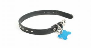 Dog collar with an ID tag on it